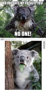 Angry Koala Meme - two koalas 29 things that will make you grin like an idiot