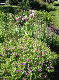 Nj Botanical Garden Nj Botanical Garden Picture Of Skylands New Jersey Botanical
