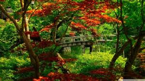 top 51 colored trees wallpapers fashionwtf