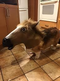 Horse Mask Meme - micro horse aww