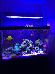 sb reef lights review sb reef lights leds vs metal halides reef2reef saltwater and