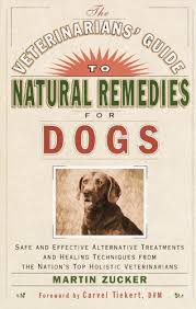 boxer dog upset stomach how to treat your dog u0027s upset stomach naturally pethelpful