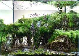 aquascape entitled the floating mountain this is aquascaping