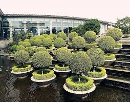 Topiary Trees Artificial Cheap - lsd1104012 wholesale bonsai tree artificial grass topiary cheap