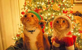 imagenes navidad 2018 graciosas felicitaciones de navidad graciosas para enviar por whatsapp el