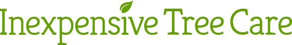 tree service portland or inexpensive tree care