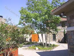 Italian Patio Design Italian Courtyard Planting Ideas