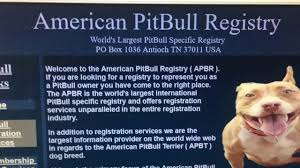 american pitbull terrier info buyers bewere of lying american pit bull registry youtube