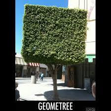 Tree Meme - mathpics mathjoke mathmeme pic joke math meme haha funny humor pun