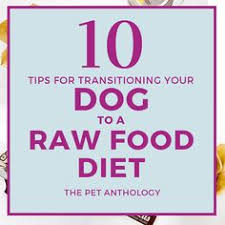 so you want to feed a homemade raw diet to your dog cat or