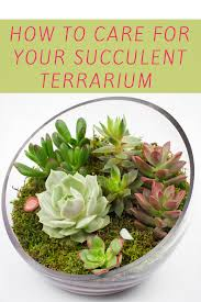how to care for succulents in terrariums terraria plants and