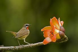 Flower And Bird - bird flower wallpaper 2000x1333 133822 wallpaperup