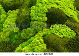 mosses and rock garden succulents stock photo royalty free image