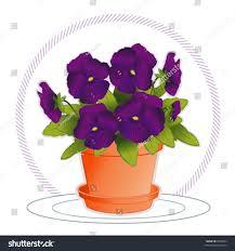 pansies deep purple garden flowers clay stock vector 8345683
