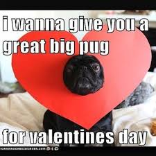 Valentines Day Funny Meme - 21 dog pictures that perfectly sum up your valentine s day barkpost