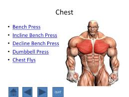 Incline Bench Muscle Group Interactive P Pt