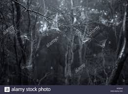spooky haloween pictures spooky halloween dead forest landscape with foggy background stock