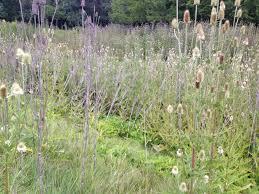 native prairie plants illinois roadside maintenance