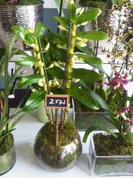 beautiful potted plants for sale at things by november the