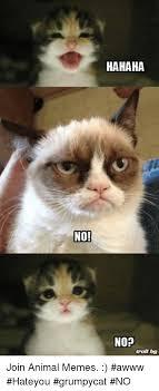 Grumpy Cat No Meme - no hahaha nop troll tog join animal memes awww hateyou grumpycat