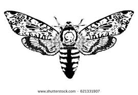 moth stock images royalty free images u0026 vectors shutterstock