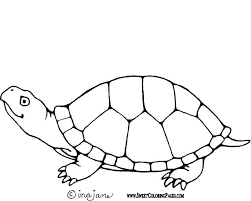 turtle coloring coloring pages turtle