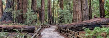 Muir Woods Map Muir Woods Giant Redwoods Tour Bay City Guide San Francisco