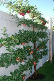 Haus Und Garten Ideen Die Besten 20 Apfelbaum Ideen Auf Pinterest Apfelrosen Tea