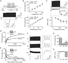 train floor plan dynamic interaction of ih and ik lva during trains of synaptic
