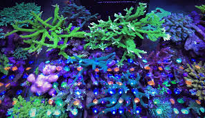 best lighting for corals best light spectrum for coral growth orphek