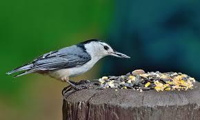 Birds In Your Backyard Is Feeding Birds A Good Idea Pros U0026 Cons Of Bird Feeding