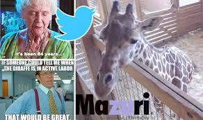 Meme Giraffe - april the giraffe memes why is the internet so obsessed with april