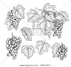 sketch images illustrations vectors sketch stock photos