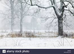 snow covered trees in a barren winter field open space is becoming