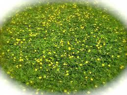 ecoturf sod llc plantant