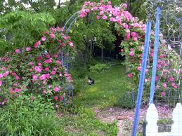 structure 2 arches the lazy organic rose gardener
