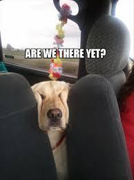 Funny Dog Face Meme - a funny dog faces dump a day