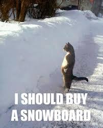 Cat Buy A Boat Meme - image 507704 i should buy a boat cat know your meme
