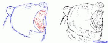 draw grizzly bear step step kids