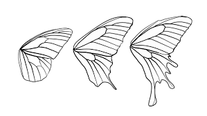 butterfly wing shapes drawingbutterfly 8 2 design shape