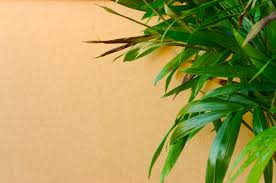 the right humidity level for your houseplants