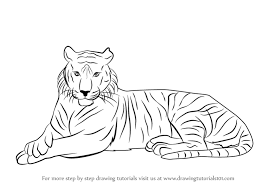 how to draw a tiger step by step for kids easy