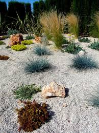 pflanzen für steingarten welche eignen sich am besten