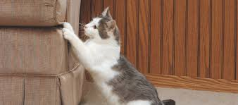 Sofa Scratch Protector 3 Ways To Prevent Cat Scratching