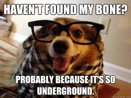 Hipster Dog Meme - new hipster dog memes quickmeme