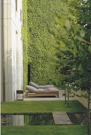 best 25 ivy wall ideas on pinterest garden bedroom ivy and