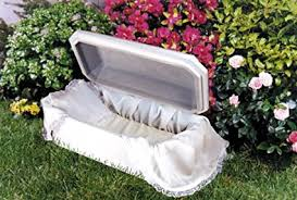 cat caskets affordable family pet caskets bird casket small dog cat