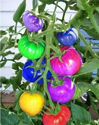 compare prices on garden tomato shopping buy low price