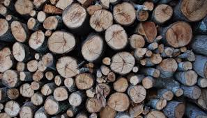 Hickory Barnes And Noble Norwegian Wood Chopping Stacking And Drying Wood The