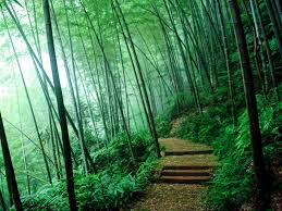 wallpaper bamboo forest wallpapers